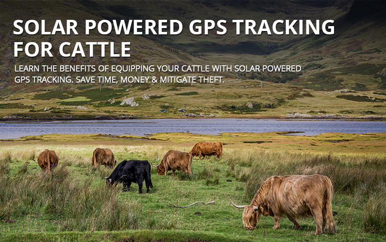 Solar Powered GPS Tracking Devices For Cattle